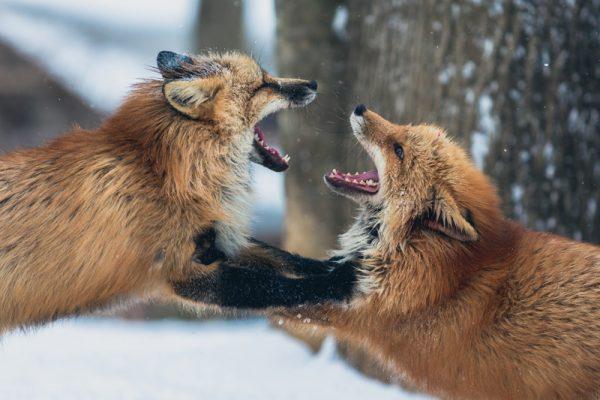 conflictos entre socios